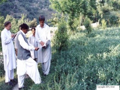 Vegetable demonstration